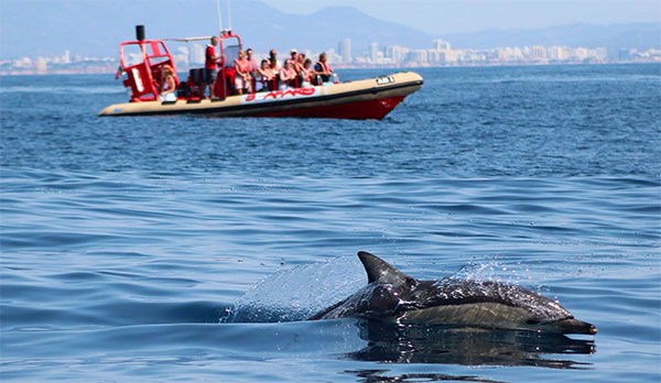 Dolphin watching in Algarve